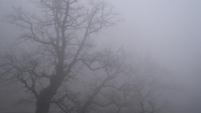 В первый рабочий день в Ленинградской области ожидается туман