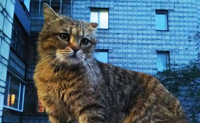 Кот осиротел после ухода хозяев на зону