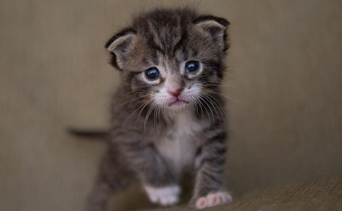 Котенок, выброшенный на помойку, умер на руках спасителя в Оби
